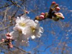 kwitnące pąki kwiatów